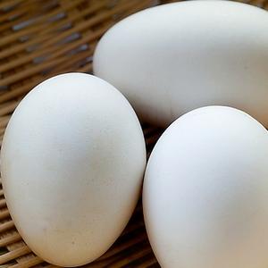 孕妇可以吃鹅蛋吗?鹅蛋的做法
