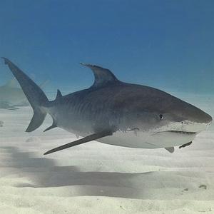 儿鲨鱼简笔画图片大全